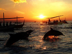 Dolphin watching at North Bali