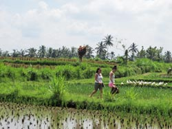 Rice field walk