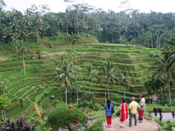 Tegalalang Ricefields